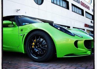 lotus_verde